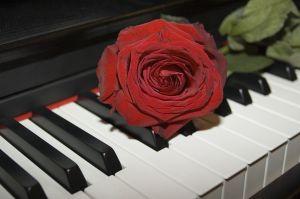 rose_1_byscottsnyd_722845