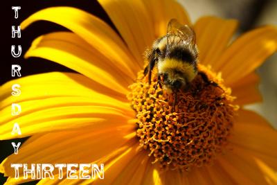 BumblebeebyBuckey1124213_1065002-T13