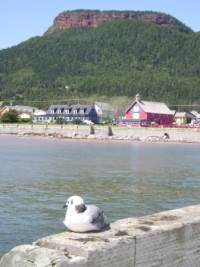 Gull on wharf in front of town - Cynthia Owens, Author of Keeper of the Light, an Irish historical romance
